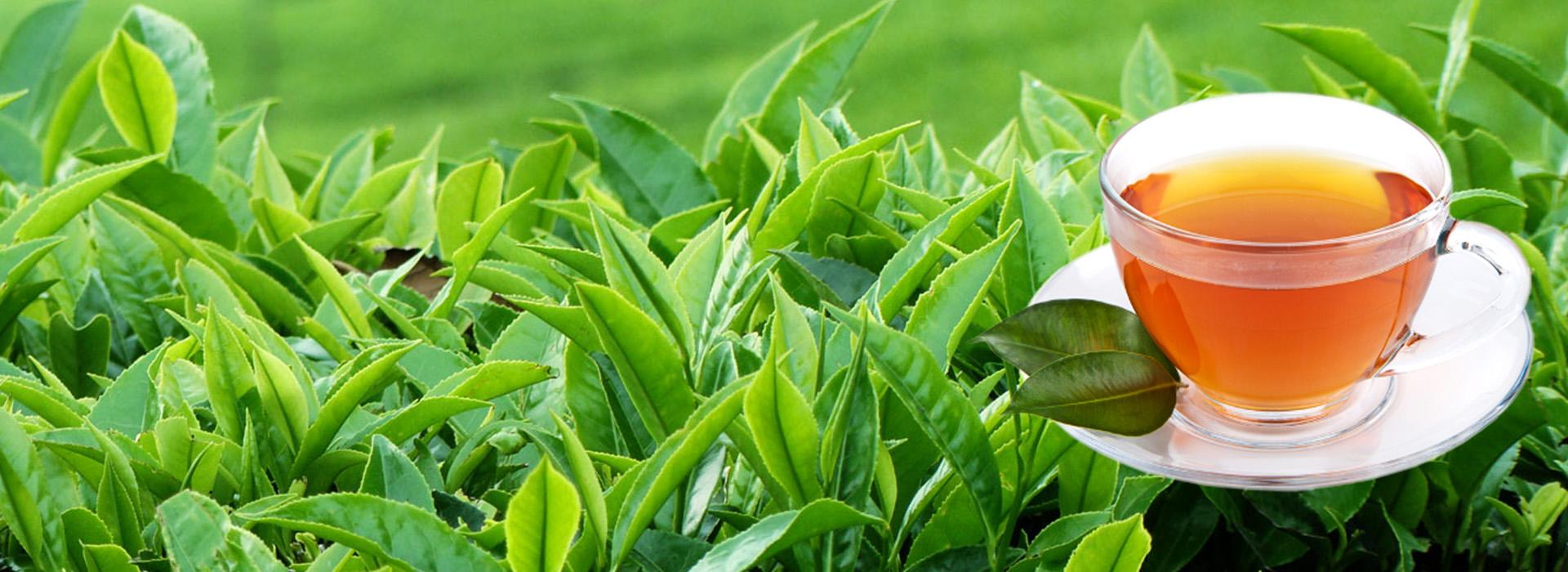 fogyni jobb zöld vagy piros tea jobby